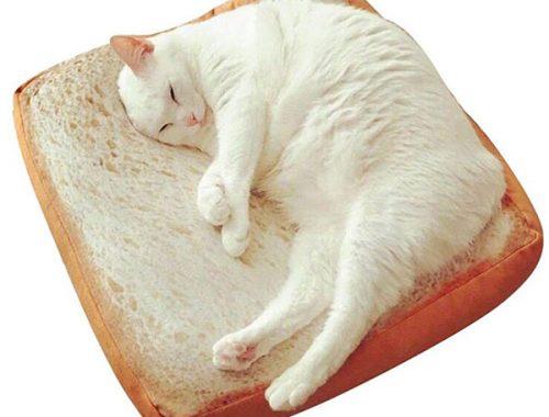 cute bread cat bed