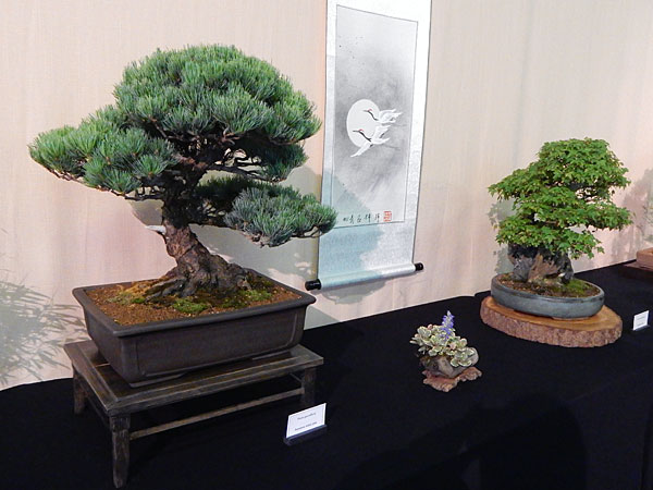 bonsai at Hyper Japan