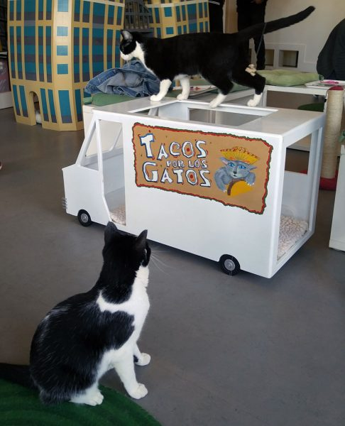 cattowntacotruckcats-1