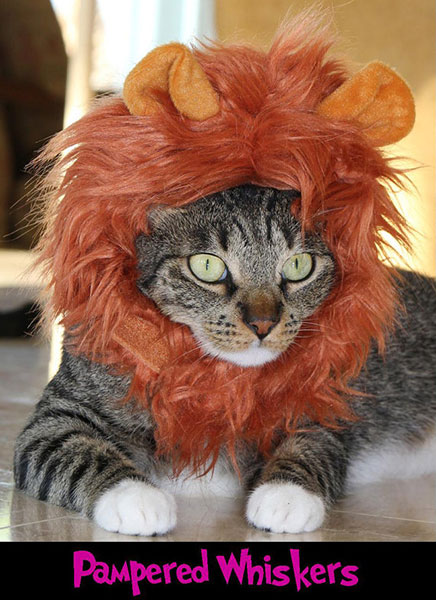 cute cats lion costume
